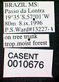 Cephalotes atratus casent0010676 label 1.jpg