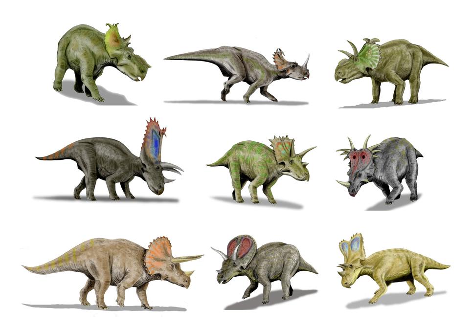 Ceratopsidae-BW-002