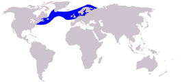Atlantic White-sided Dolphin range