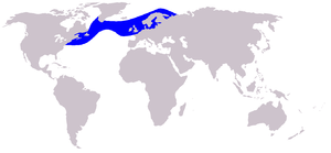 Atlantic white-sided dolphin - Image: Cetacea range map Atlantic White sided Dolphin