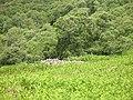 Chambered cairn, Killin - geograph.org.uk - 854702.jpg