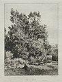 Charles-Émile Jacque - Landscape - 1921.1460 - Cleveland Museum of Art.jpg