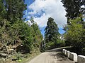 Chelela to Paro road views during LGFC - Bhutan 2019 (85).jpg