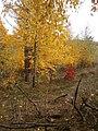 Cherkas'kyi district, Cherkas'ka oblast, Ukraine - panoramio (358).jpg