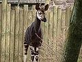 Chester Zoo (9484614999).jpg