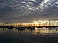 Chicago Boats at Monroe Harbor.jpg