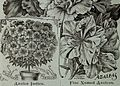 Childs' rare flowers, vegetables, and fruits (1904) (20607069485).jpg