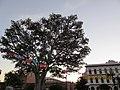 Chinatown, Los Angeles, CA, USA - panoramio (50).jpg