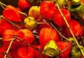 Chinese Lanterns (10168874785).jpg