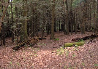 Unicoi Mountains - Mixed hardwood and pine forest in the Citico Creek Wilderness