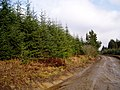 Clocaenog forest - geograph.org.uk - 322158.jpg