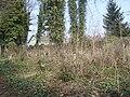 Cmentarz żydowski Bielsko-Biała - sektor D.jpg