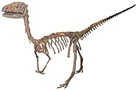 Coelophysis (1) white background.jpg