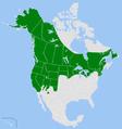 Coenonympha tullia - North America.png