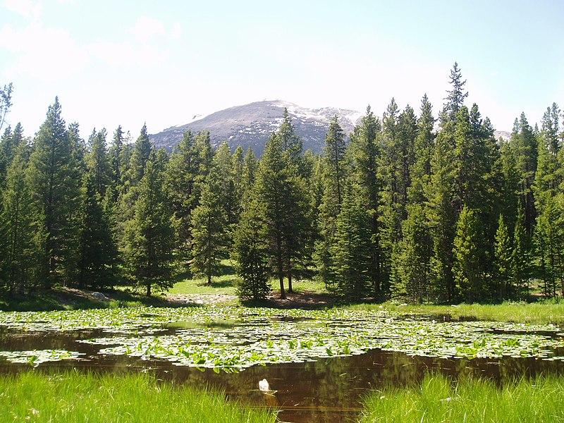 File:Colorado USA Forest (Summer 2005).jpg