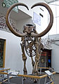 Columbian Mammoth - Front View (Florida).jpg