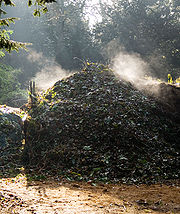 An active compost heap.