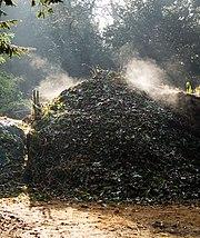 An active compost heap.