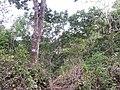 Concepción de Ataco, El Salvador - panoramio (1).jpg