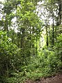 Costa Rica (6094075593).jpg