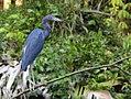 Costa Rica 42.DSCN4767-Mnew (30322670403).jpg