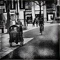 Cradle Bike (260364403).jpeg