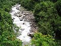 Creek amidst lush Greenery.jpg
