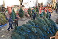 Crew of Mackinaw unloads Christmas trees in Chicago 121201-G-PL299-399.jpg
