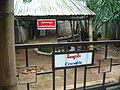 Crocodile Displayed at Sein Lae Tin Hotel Resort Myanmar.JPG