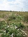 Cross-field path to Godwick - geograph.org.uk - 524965.jpg