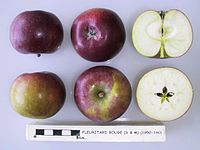 Cross section of Fleuritard Rouge (S & M), National Fruit Collection (acc. 1950-160).jpg