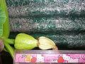 """Cucurbita maxima """"zapallo plomo"""" (Costanzi temp2) flor fruto F04 dia03 orientación vista lateral pétalos marchitándose regla.JPG"""