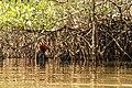 Cueilleuse traditionnelle d'Huîtres de mangrove, delta du Sine Saloum, femme du village de Soucouta, Sénégal.jpg