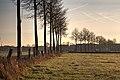Dülmen, Hausdülmen, Wallgarten -- 2015 -- 0228-32.jpg