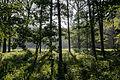 Dülmen, Naturschutzgebiet -Am Enteborn- -- 2014 -- 0199.jpg