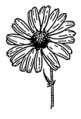 Daisy (PSF).png