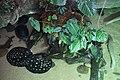 Dallas World Aquarium January 2019 03 (Arrau turtles, bigtooth river stingrays, and golden dorados).jpg