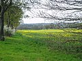 Danbury - Rape Fields - geograph.org.uk - 397250.jpg