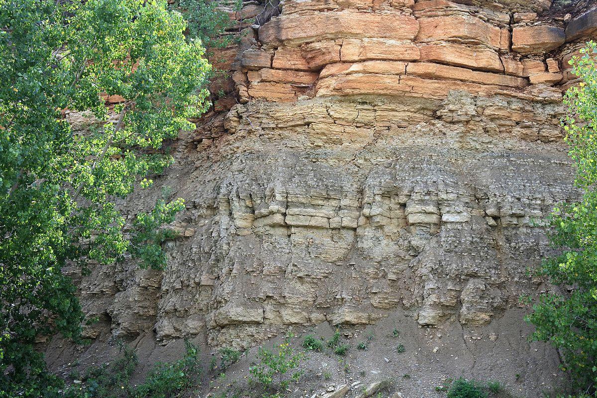 decorah shale wikipedia