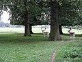Deer At Tatton Old Hall - geograph.org.uk - 1494706.jpg
