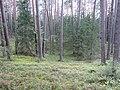 Degučių sen., Lithuania - panoramio (204).jpg