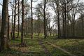 Denge Wood - geograph.org.uk - 404351.jpg