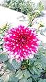 Dense Look of Flower.jpg