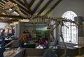 Dilophosaurus (1).jpg