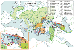 Distribution of the galanthus species.png