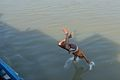 Diving into Ganges - River Hooghly 2013-11-09 4199 Cropped.JPG