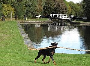 English: Dog fishes at Tinsley canal Small dog...