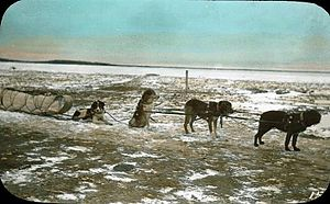 Île-à-la-Crosse - Dog team and sled, Ile-à-la-Crosse, SK, about 1910
