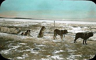 Île-à-la-Crosse - Dog team and sled, Ile-à-la-Crosse, SK, about 1910