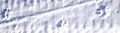 Dog tracks (4459283504).jpg